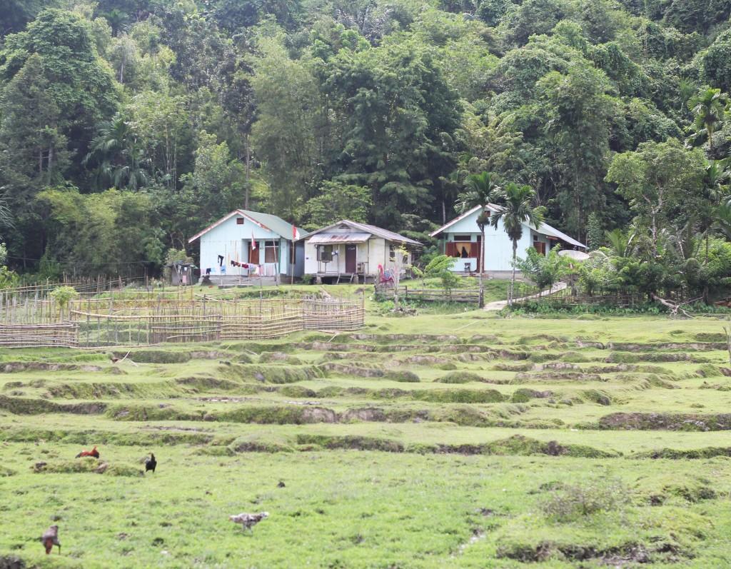 sumatra_08282015_ricefield